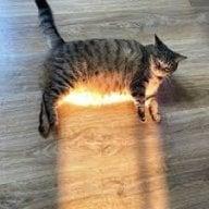 Lux ultisi kullanan kedi