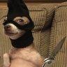 Talipp