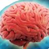 beyin kemiren