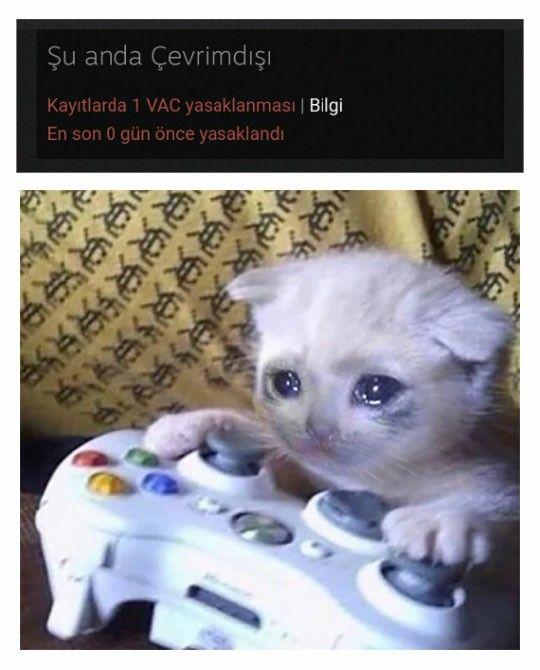 sad-gaming-cat-23052020041426-jpg.570981