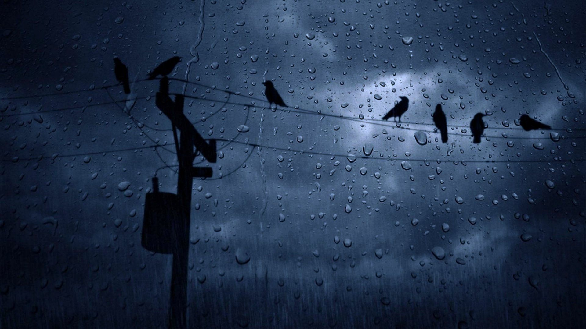 weather_rain_birds_winter_cloudy_sky_3840x2160.jpg