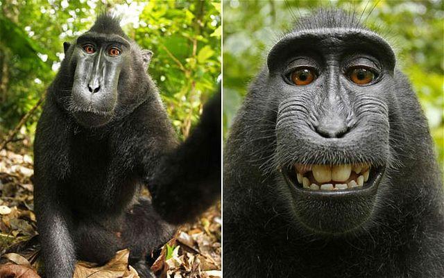 maymun-ozcekim