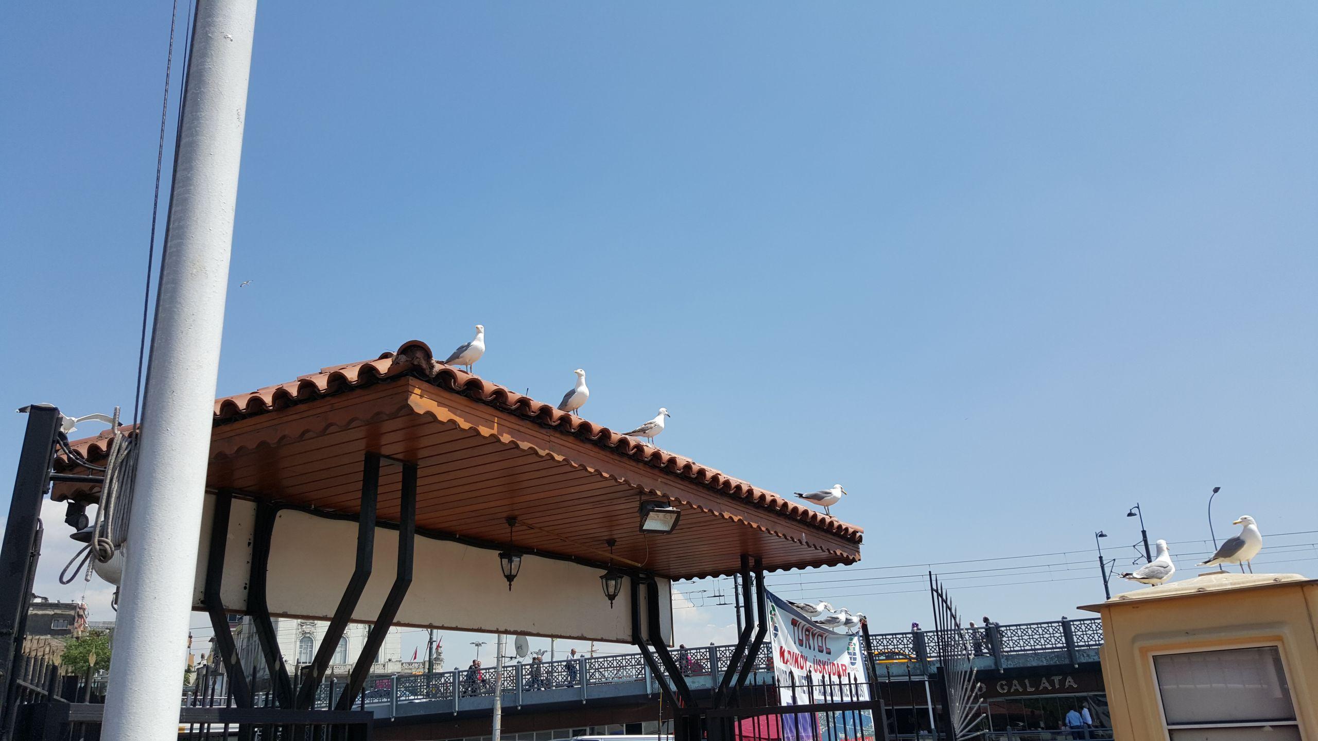 Karaköy Motor İskelesi'nde martılar. Zoom yok.