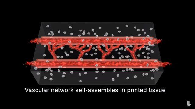 bio-ink damar