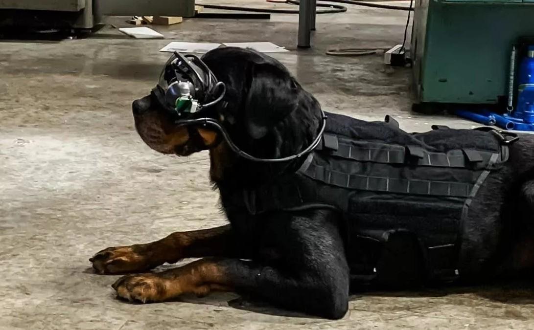 Artırılmış Gerçeklik Gözlükleri, Askeri Köpekler Üzerinde Test Ediliyor